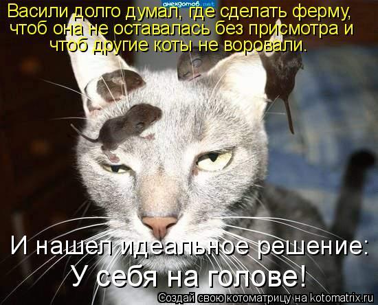 Котоматрица: Васили долго думал, где сделать ферму, чтоб она не оставалась без присмотра и чтоб другие коты не воровали. И нашел идеальное решение: У себя