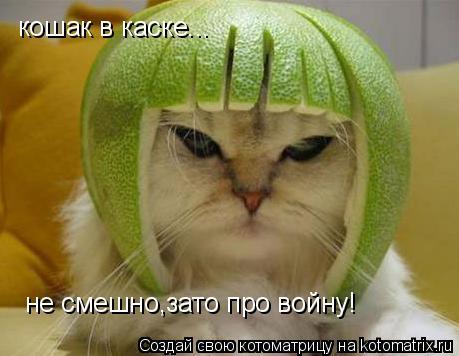 Котоматрица: кошак в каске... не смешно,зато про войну!