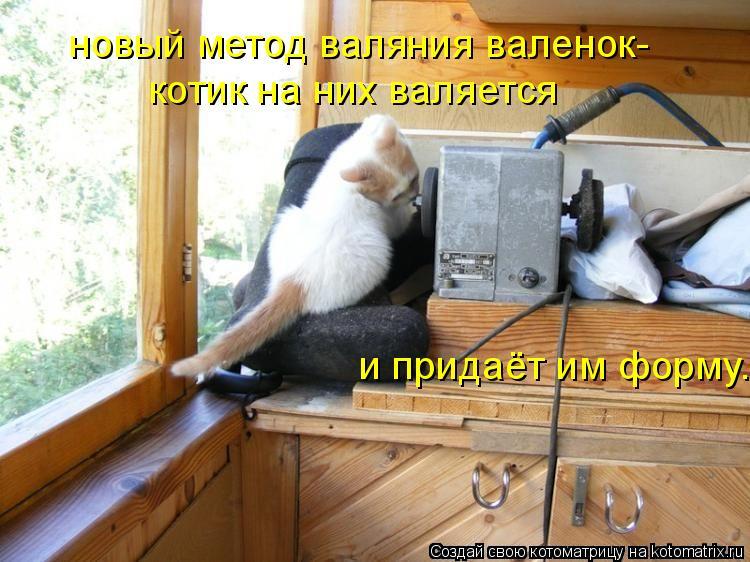 Котоматрица: новый метод валяния валенок- котик на них валяется   и придаёт им форму.