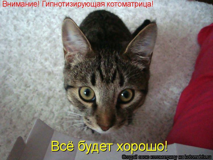 Котоматрица: Внимание! Гипнотизирующая котоматрица! Всё будет хорошо!
