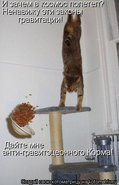Котоматрица: И зачем в космос полетел? Ненавижу эти законы  гравитации! Дайте мне  анти-гравитэцеонного Корма!
