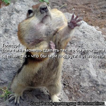 Котоматрица: Господи!  Если ты не можешь сделать так что бы я похудела, сделай так - что бы мои подруги потолстели!!!