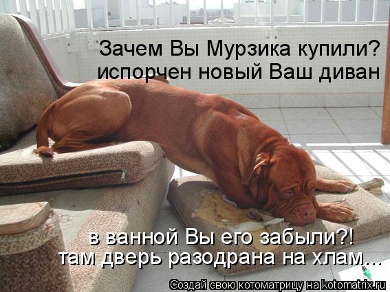Котоматрица: Зачем Вы Мурзика купили? испорчен новый Ваш диван в ванной Вы его забыли?! там дверь разодрана на хлам...