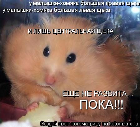 Котоматрица: у малышки-хомяка большая правая щека у малышки-хомяка большая левая щека И ЛИШЬ ЦЕНТРАЛЬНАЯ ЩЕКА ЕЩЕ НЕ РАЗВИТА... ПОКА!!!