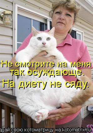 Котоматрица: Не смотрите на меня так осуждающе. На диету не сяду.