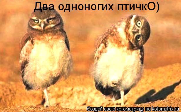 Котоматрица: Два одноногих птичкО)