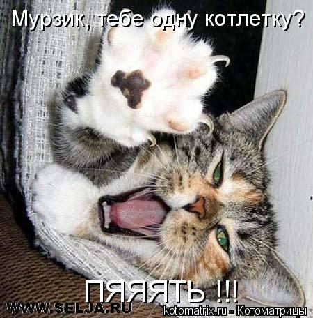 Котоматрица: Мурзик, тебе одну котлетку? ПЯЯЯТЬ !!!