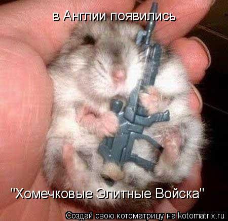 """Котоматрица: в Англии появились """"Хомечковые Элитные Войска"""""""