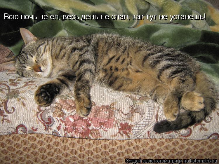Котоматрица: Всю ночь не ел, весь день не спал, как тут не устанешь!