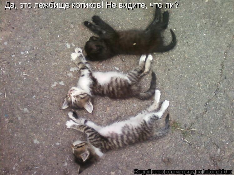 Котоматрица: Да, это лежбище котиков! Не видите, что ли?