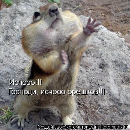 Котоматрица: Исчооо!!! Господи, исчооо орешков!!!