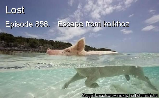 Котоматрица: Lost Episode 856. Escape from kolkhoz
