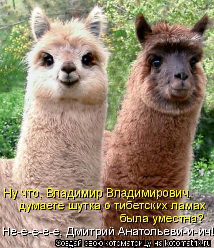 Котоматрица: Ну что, Владимир Владимирович, думаете шутка о тибетских ламах была уместна? Не-е-е-е-е, Дмитрий Анатольеви-и-ич!