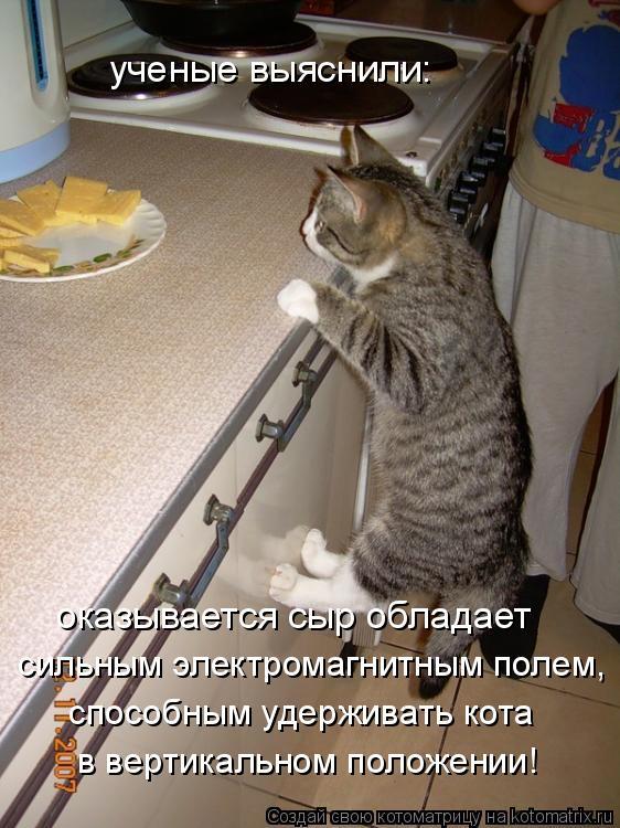 Котоматрица: ученые выяснили: оказывается сыр обладает  сильным электромагнитным полем, способным удерживать кота в вертикальном положении!