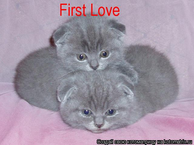 Котоматрица: First Love