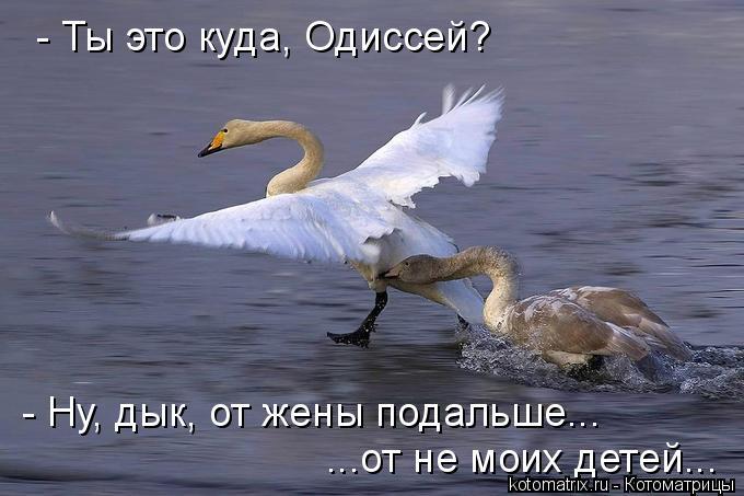 Котоматрица: - Ты это куда, Одиссей? - Ну, дык, от жены подальше... ...от не моих детей...