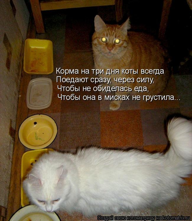 Котоматрица: Корма на три дня коты всегда Поедают сразу, через силу, Чтобы не обиделась еда, Чтобы она в мисках не грустила...