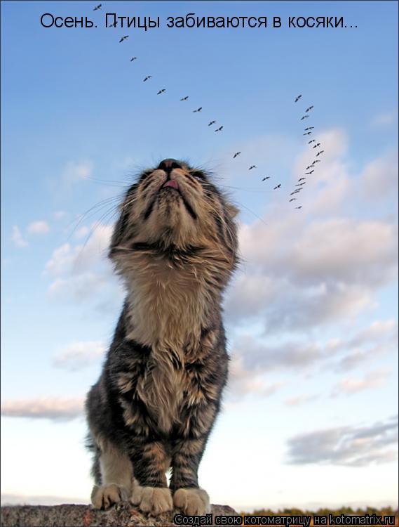 Котоматрица: Осень. Птицы забиваются в косяки...
