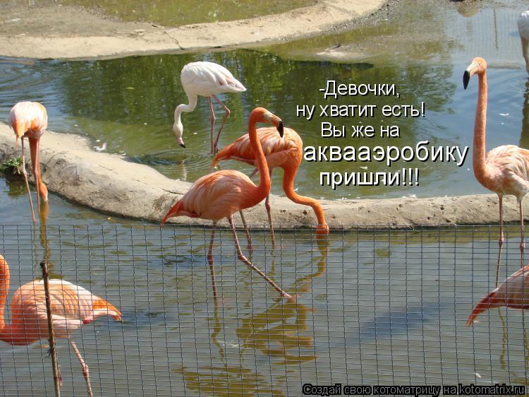 Котоматрица: -Девочки,  ну хватит есть! Вы же на аквааэробику пришли!!!