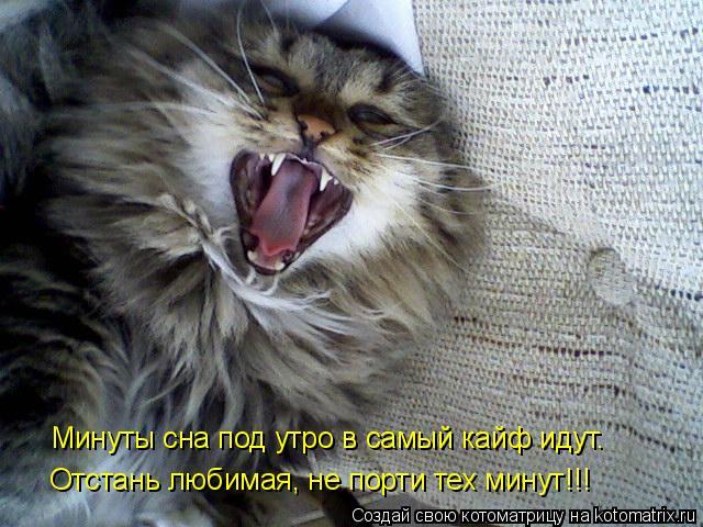 Котоматрица: Минуты сна под утро в самый кайф идут…  Отстань любимая, не порти тех минут!!!