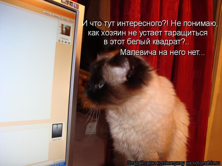 Котоматрица: И что тут интересного?! Не понимаю, как хозяин не устает таращиться в этот белый квадрат?.. Малевича на него нет...