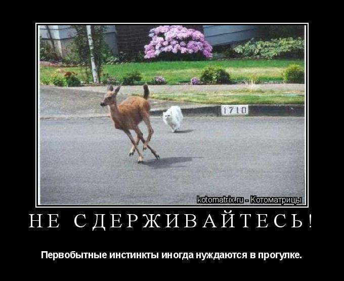 Котоматрица: Не сдерживайтесь! Первобытные инстинкты иногда нуждаются в прогулке.