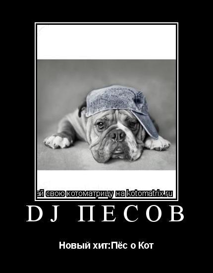 Котоматрица: DJ Пёсов Новый хит:Пёс о Кот