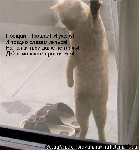 Котоматрица: - Прощай! Прощай! Я ухожу! И поздно слезам литься! На тапки твои даже не гляжу! Дай с молоком проститься!