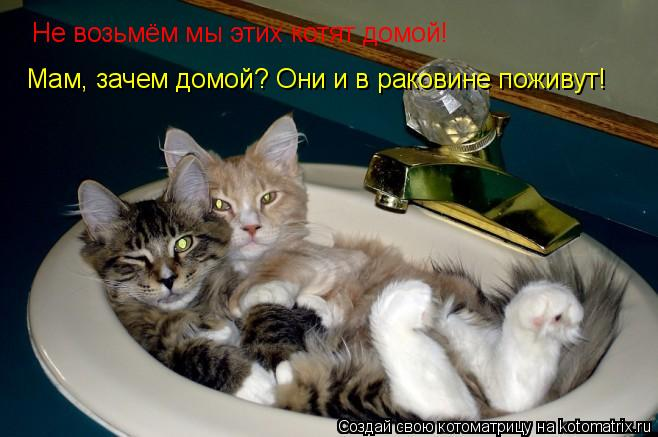 Котоматрица: Не возьмём мы этих котят домой! Мам, зачем домой? Они и в раковине поживут!