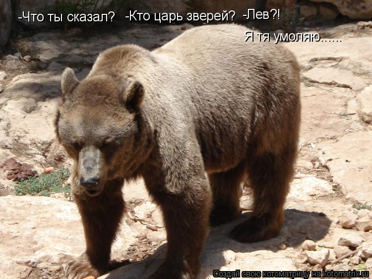 Котоматрица: -Что ты сказал? -Кто царь зверей? -Лев?! Я тя умоляю......
