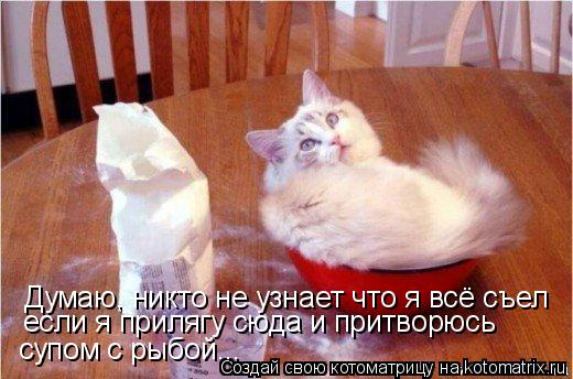 Котоматрица: Думаю, никто не узнает что я всё съел если я прилягу сюда и притворюсь  супом с рыбой...