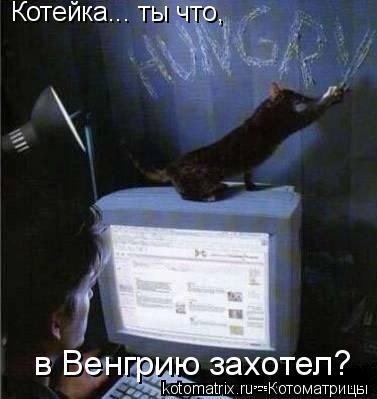 Котоматрица: Котейка... ты что, в Венгрию захотел?