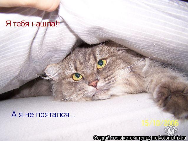 Котоматрица: Я тебя нашла!! А я не прятался...