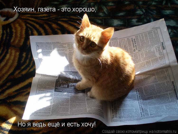 Котоматрица: Хозяин, газета - это хорошо, Но я ведь ещё и есть хочу!