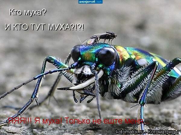 Котоматрица: Кто муха? И КТО ТУТ МУХА?!?! ЯЯЯ!!! Я муха! Только не еште меня...