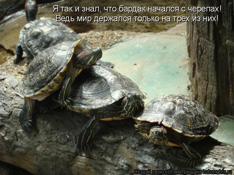 Котоматрица: Я так и знал, что бардак начался с черепах! Ведь мир держался только на трех из них!