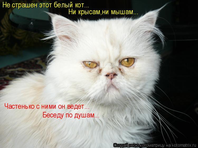 Котоматрица: Не страшен этот белый кот... Ни крысам,ни мышам... Частенько с ними он ведет... Беседу по душам...