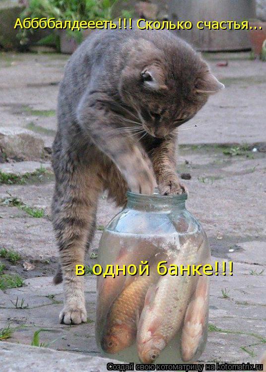 Котоматрица: Аббббалдеееть!!!! Сколько счастья в одной банке!!! Аббббалдеееть!!! Сколько счастья...  в одной банке!!!