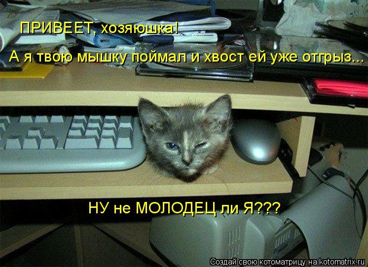 Котоматрица: ПРИВЕЕТ, хозяюшка! А я твою мышку поймал и хвост ей уже отгрыз... НУ не МОЛОДЕЦ ли Я???