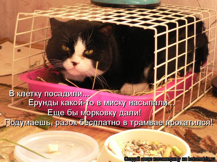 Котоматрица: В клетку посадили... Ерунды какой-то в миску насыпали... Еще бы морковку дали! Подумаешь, разок бесплатно в трамвае прокатился!