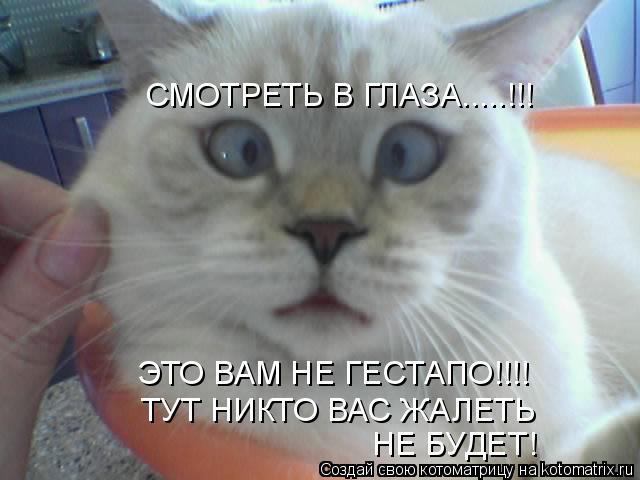 Котоматрица: СМОТРЕТЬ В ГЛАЗА.....!!! ЭТО ВАМ НЕ ГЕСТАПО!!!! ТУТ НИКТО ВАС ЖАЛЕТЬ НЕ БУДЕТ!