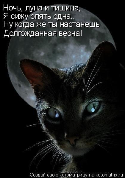 Котоматрица: Ночь, луна и тишина, Я сижу опять одна.. Ну когда же ты настанешь Долгожданная весна!