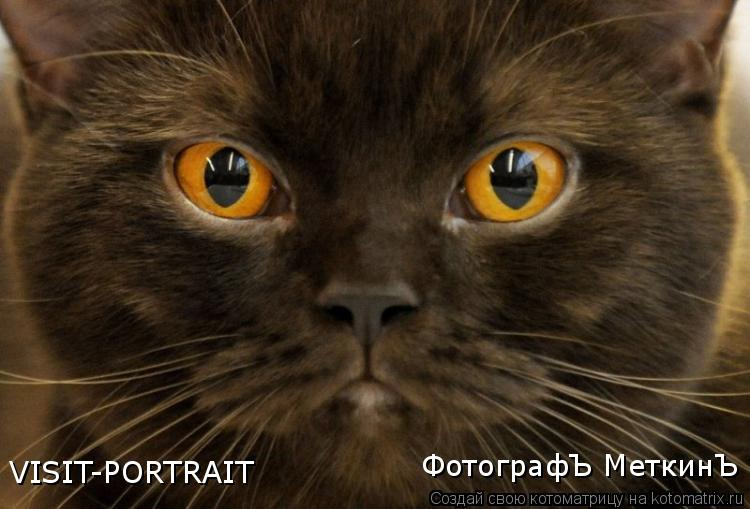 Котоматрица: VISIT-PORTRAIT ФотографЪ МеткинЪ