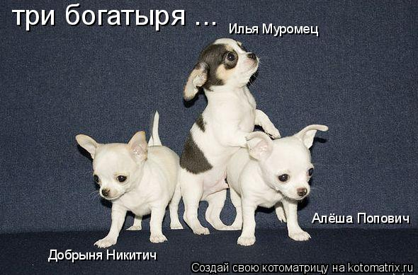 Котоматрица: три богатыря ... Добрыня Никитич Илья Муромец Алёша Попович