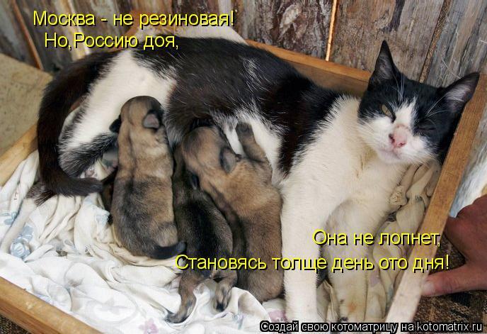 Котоматрица: Москва - не резиновая! Но,Россию доя, Она не лопнет, Становясь толще день ото дня!