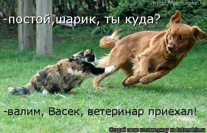 Котоматрица: -постой,шарик, ты куда? -валим, Васек, ветеринар приехал!