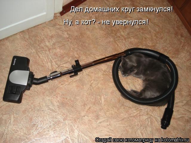 Котоматрица: Дел домашних круг замкнулся! Ну, а кот? - не увернулся!