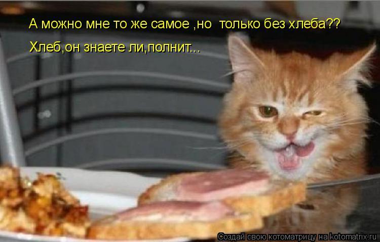 Котоматрица: Хлеб,он знаете ли,полнит... А можно мне то же самое ,но  только без хлеба??