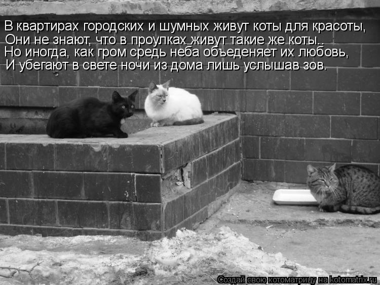 Котоматрица: В квартирах городских и шумных живут коты для красоты, Они не знают, что в проулках живут такие же коты.. Но иногда, как гром средь неба объед