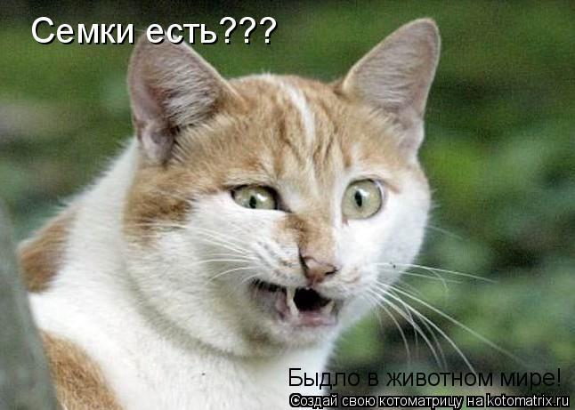 Котоматрица: Семки есть??? Быдло в животном мире!
